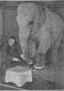 Amar, les origines du cirque dans Histoire locale amar-%C3%A9l%C3%A9phant-212x300